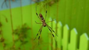alluring web